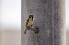 Paukštis ant gatvės stulpo / Bird on the street pole