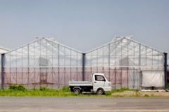 Gėlės Namie mieste: šiltnamiai / Flowers in Namie town: greenhouses