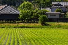 Fukušima vis dar susiduria su įvairiais iššūkiais, tačiau jau padarė nepaprastą pažangą atsigaudama. Žmonės, nepaisant neaiškumų ir abejonių, po truputį grįžta į savo namus ir ėmėsi kurti regiono atei-tį, užtikrindami visuomenės ramybę / Fukushima is still facing various challenges but made already a remarkable progress in recovery. People despite the uncertainties and doubts little by little continue to return to their homes and have set about shaping the region's future ensuring peace of mind of society