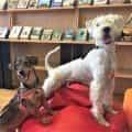 šunys bibliotekoje-2-2